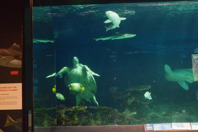A Turtle Among the Sharks