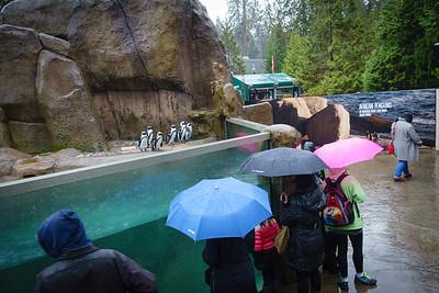 Penguins in the Rain