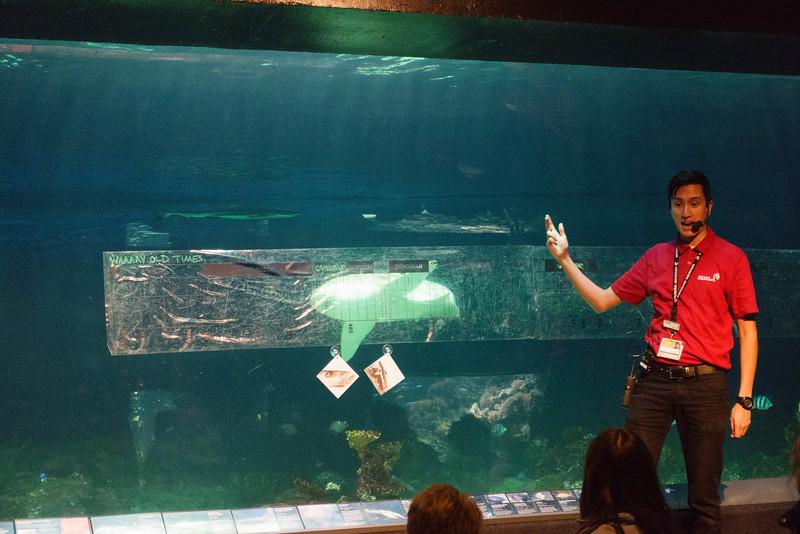 The Shark Talk