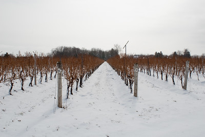 Vineyards at CREW