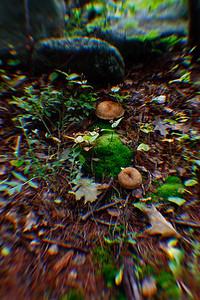 Wild Mushrooms, Makalika Cottage, Milford Bay