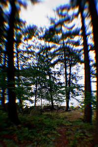 The Woods Surrounding Makalika Cottage, Milford Bay
