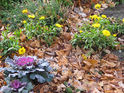 Late Fall Gardens