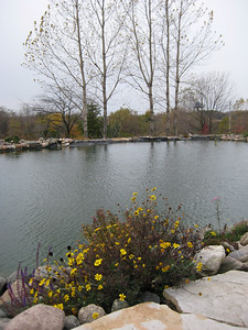 Late Fall Blooms Beside the Fish Pond