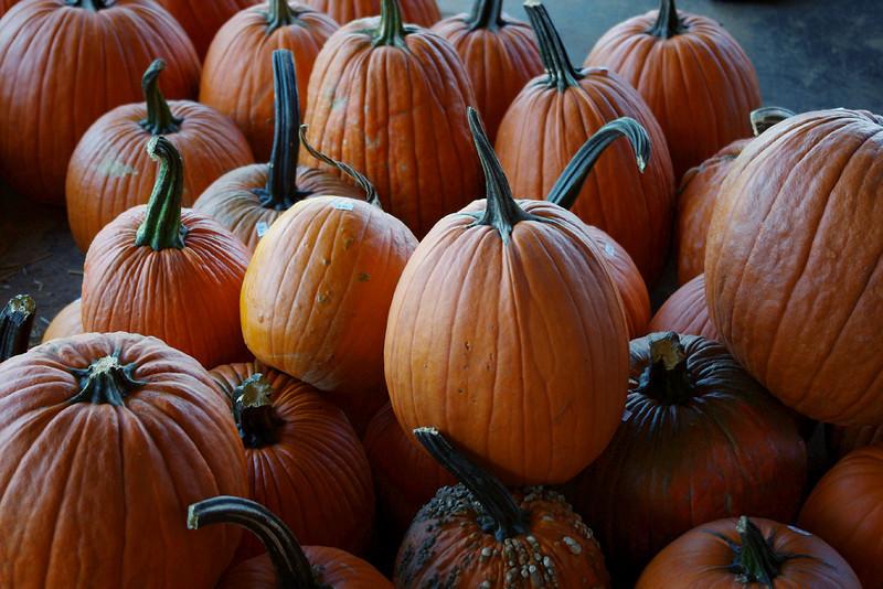 Pumpkins. Murphy Orchard, Marionville, Mo.
