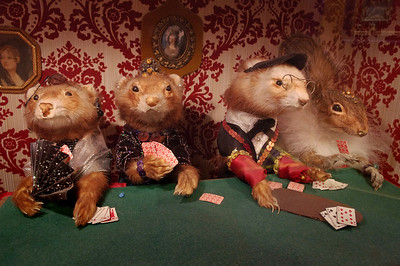 Who doesn't love stuffed Ferrets playing cards? Ripley's Believe It Or Not Museum, Branson, Missouri.