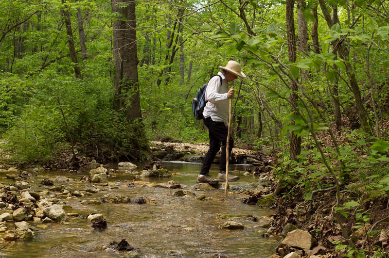 Rita crossing a small tributry of Bryant Creek. Cedar Gap Conservation Area near Mansfield, Missouri.