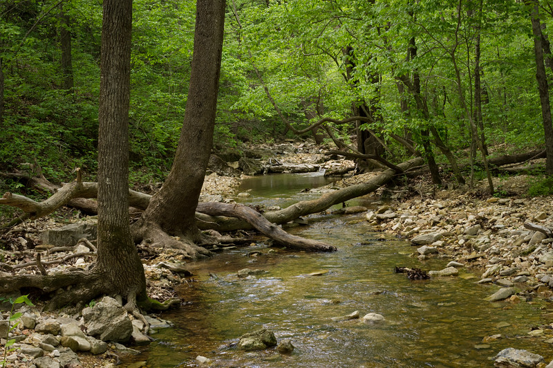 Small tributary of Bryant Creek flowing through Ozarks Forest. Cedar Gap Conservation Area near Mansfield, Missouri.