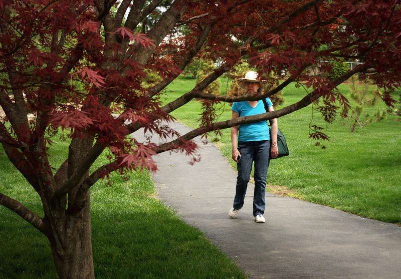 Rita seen through a Japanese maple tree - Mizumoto Japanese Stroll Garden, Springfield, Missouri.