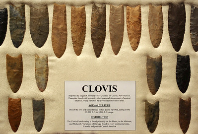 A very nice collection of Clovis points on display at the Museum of Native American History, Bentonville, Arkansas.