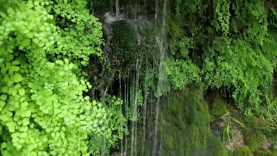 Spring water falling among ferns; a short video.