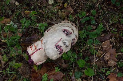 Decapitated head seen beside the Greenways Trail at the Wilson-Rutledge farm.