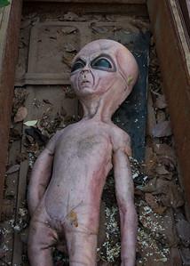 Dead alien. Seen beside the Greenways Trail at the Wilson-Rutledge farm.