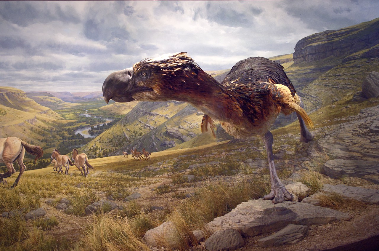 The Terror Bird diorama; Ancient Ozarks Natural History Museum at Top of the Rock near Branson, Missouri.