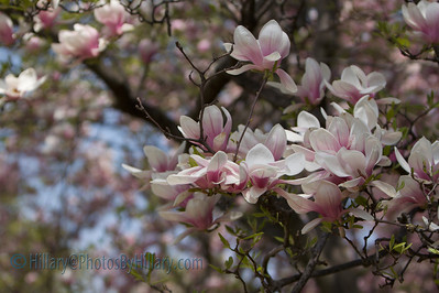 IMG_5174 (4 of 115)