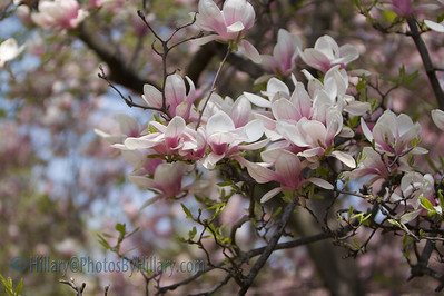 IMG_5171 (2 of 115)