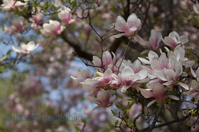 IMG_5172 (3 of 115)