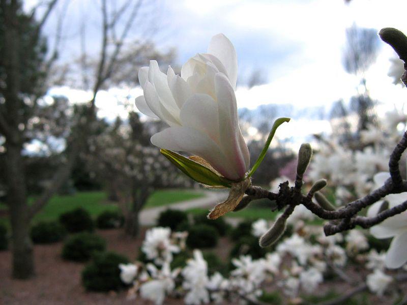 Pozegnalne zdjecie w jednym z naszych ulubionych miejsc w Dayton: ogrodzie botanicznym (Cox Arboretum). Wiosna byla w pelni.<br /> <br /> A farewell picture taken in one of our favorite places in Dayton: Cox Arboretum. The Spring was in full swing (it even rhymes).