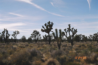 On the way to Mohave, plenty of Joshua Trees, Mohave National Preserve, CA