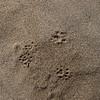Alle dune di sabbia