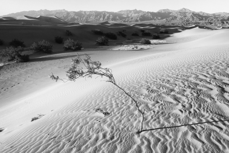 On the mesquite flat sand dunes