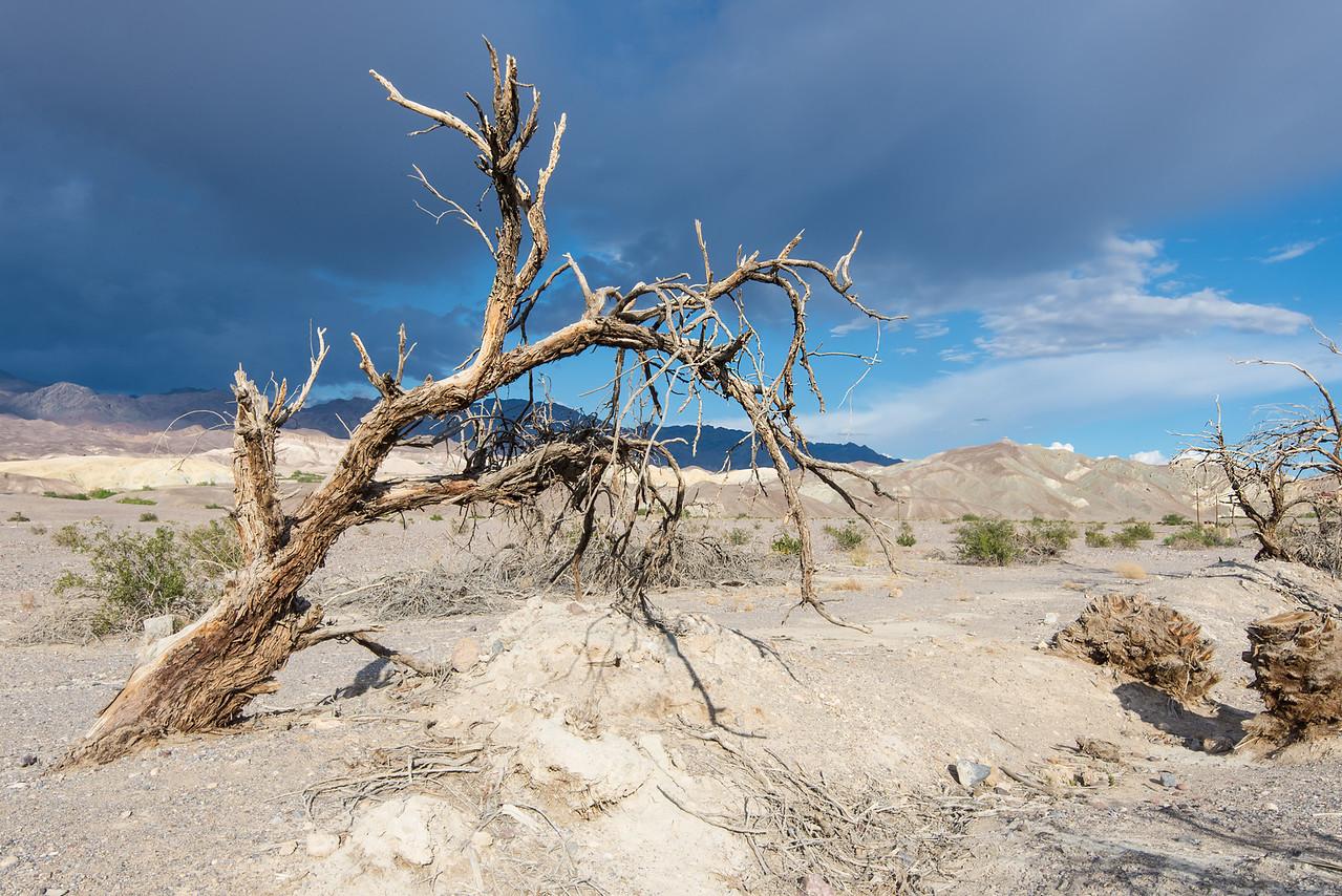 Dead tree near Furnace Creek in Death Valley National Park, California - April 2016