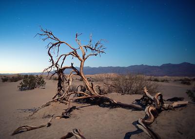 Dead Tree by Moonlight