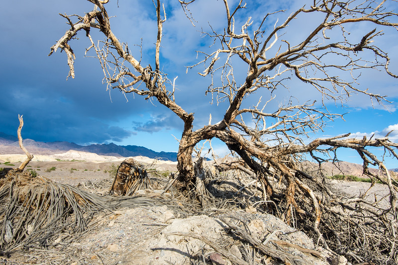 Dead tree near Furnace Creek in Death Valley National Park, California - April 2016
