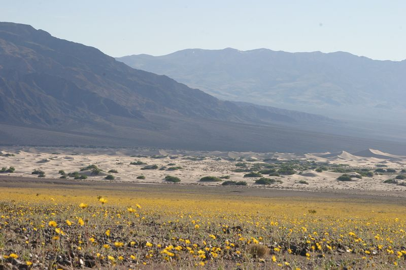 "<font size=""+1"">More fields of sunflowers.. </font>"