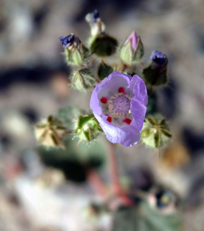 """<font size=""""+1"""">Another sort of cool purple flower.  This one is about an inch across.   Not nearly as many of them as the Sun Flowers, but lot's never the less. </font>"""