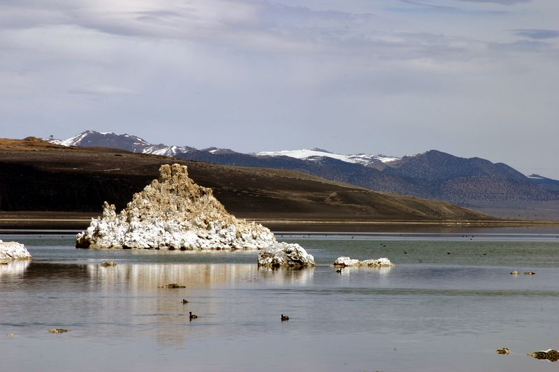 """<font size=""""+1"""">One of the creepy mineral buildups that got exposed as Mono Lake dried up.  The lake was so deprived of water, that it has dropped over 50 feet since they started diverting water to LA.  This is some sort of limestone build up from hot springs that were under water at one time.  There was a name for the material, but I've forgotten what they called it now. </font>"""