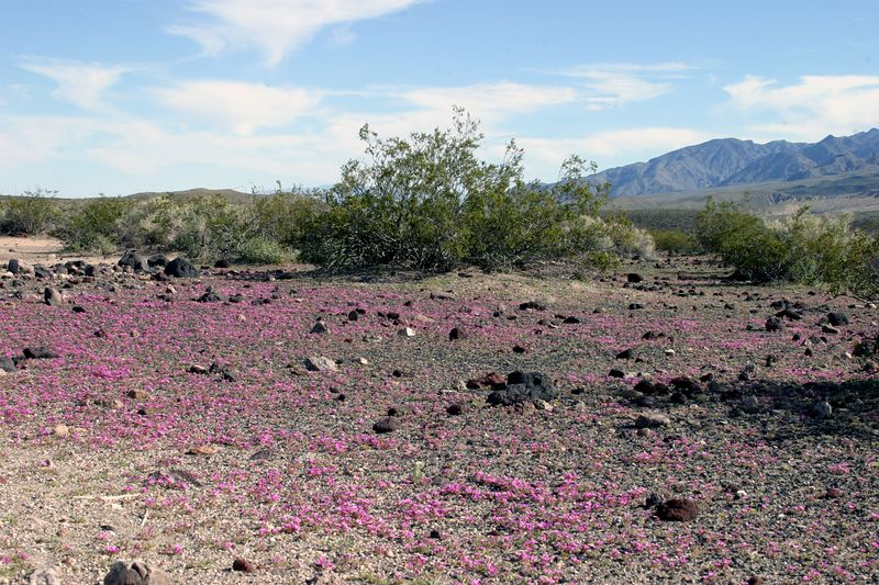 "<font size=""+1"">As we keep driving further and further down into the valley more and more ""areas of interest"" kept popping up.  At one point we realized were were driving through these huge patches of ground where there was a little purple flower so dense on the ground it looked like berber carpet. </font>"