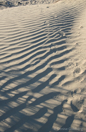 late afternoon in the sand dunes