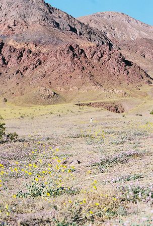 Death Valley National Park: Trips