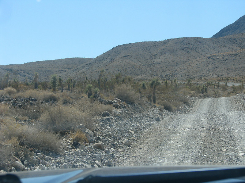 A army of Yucca close in on both sides of the road.