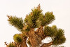 A Joshua Tree on the way to the Racetrack. I wish it had been blooming.