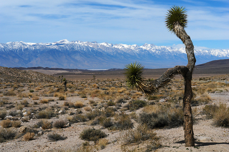 Sierra Nevada mountain range in the background