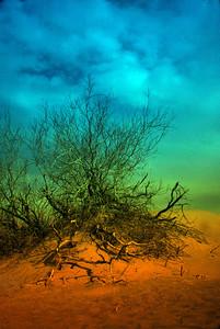 Death Valley Colored Bush 07