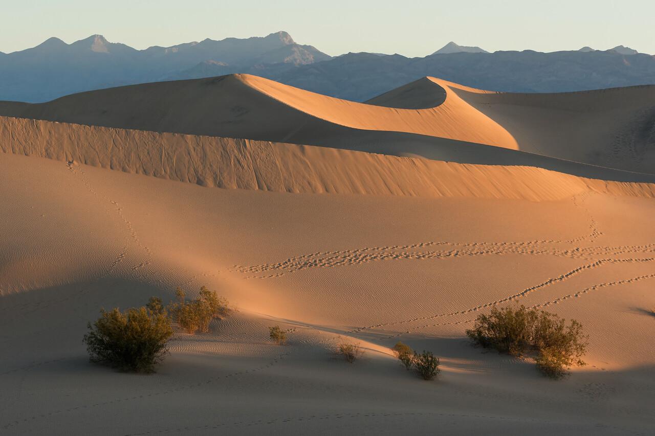 Sunrise Mesquite Flats