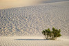 Lonely bush at Mesquite dunes