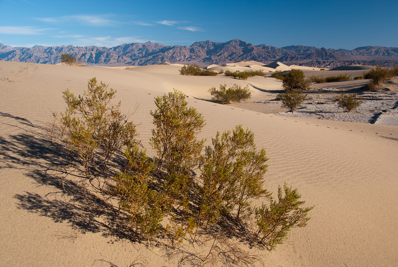 """<span id=""""title"""">Mesquite Flats Dunes</span> <em>Mesquite Flats Dunes</em> This is a very representative shot of the sand dunes. You can see human footprints, natural ripples, a plant, mud flats, larger dunes in the distance, and mountains in the Amargosa range in the very background."""