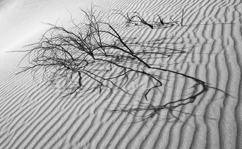 "<span id=""title"">Dune Shadows</span> <em>Mesquite Flats Dunes</em> Caption"