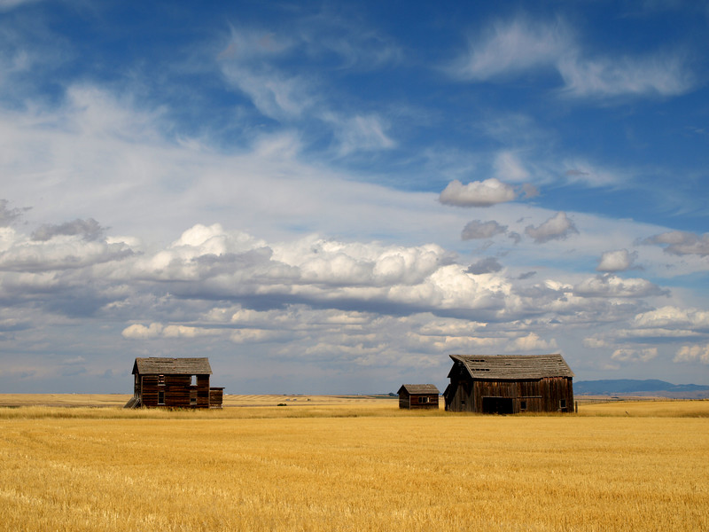 Old farm structures in Montana.
