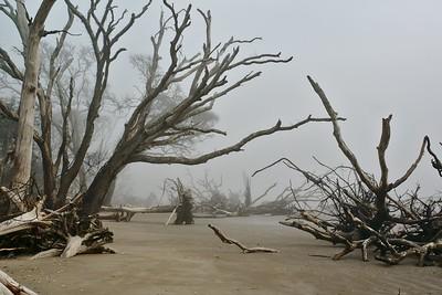 "The ""tree grave yard"" on the beach at Botany Bay Plantation"