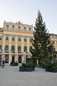 The market's trees in front of the Palace.