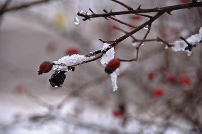 More frozen berries...