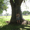 12/21 - Big tree at Ala Moana park