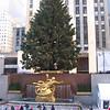 Rockefeller Center's big tree.