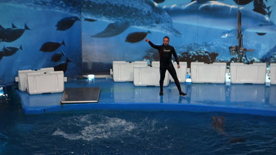 show with dolphins in Barcelona, videos