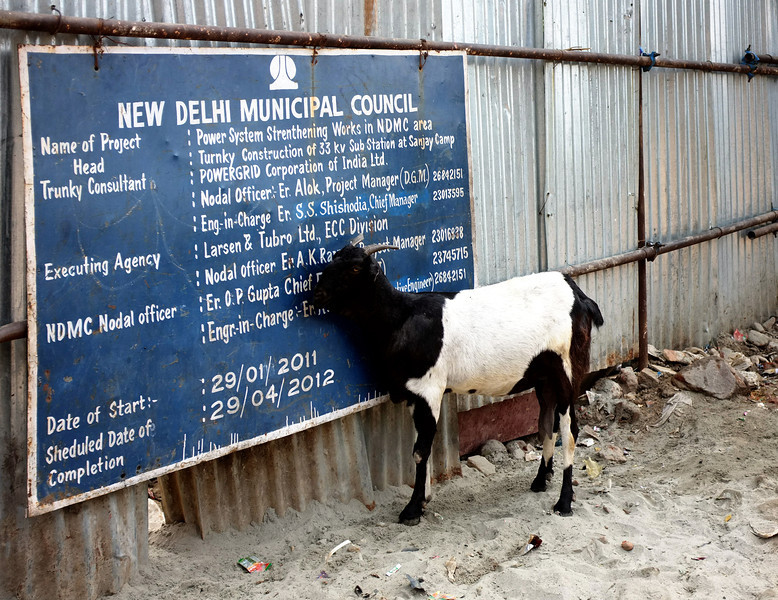 New Delhi goat reading sign